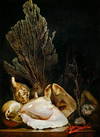 Antoine Berjon seashells